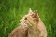 Free Tan Cat Beside Green Grass During Daytime Stock Photography - 89635272