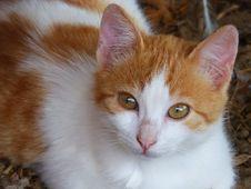 Free Portrait Of Tabby Cat Stock Photos - 89636183