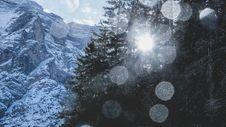 Free Sun Through Mountain Pine Trees Stock Photo - 89637750