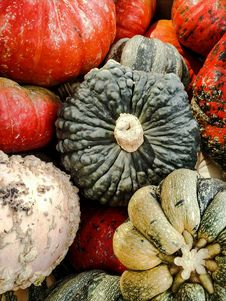 Free Gourds Stock Image - 89690181