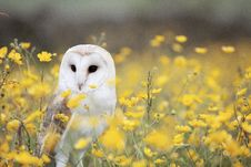 Free White And Brown Feathered Owl Standing On Yellow Petaled Flower During Daytime Stock Photos - 89691043