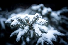 Free Selective Blur Of Pine Tree With Snow Royalty Free Stock Photos - 89691238