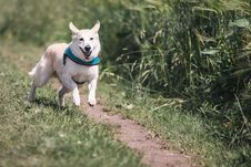 Free White Dog With Teal Collar Running Outside Stock Photos - 89693653