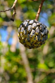 Free Tropical Fruit Royalty Free Stock Photo - 8970255