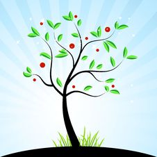 Free Spring Tree For Your Design Royalty Free Stock Photo - 8970715
