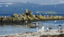 Free Evning In Bird Island Stock Photography - 8971052
