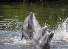 Free Dolphins Stock Photo - 8971110