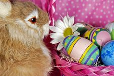 Free Bunny Basket Stock Photo - 8971150