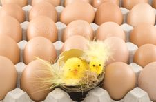 Free Easter Chickens Stock Photos - 8971703