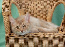 Free Cat Relaxing On A Wicker Chair Stock Photos - 8973683