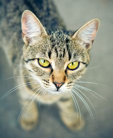 Free Interesting Cat Royalty Free Stock Photos - 8974378