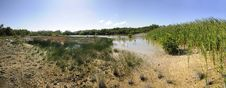 Free Dried Pond Panorma Royalty Free Stock Photo - 8974415