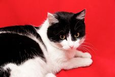Free Cat Royalty Free Stock Photography - 8975267