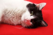 Free Cat Stock Image - 8975381