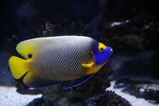 Free Tropical Fish Royalty Free Stock Image - 8976346