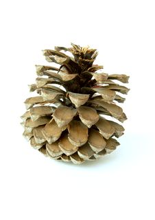 The Cedar Cone Stock Photography