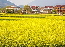 Free Farmland Stock Image - 8976561