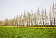 Free Farmland Stock Image - 8976931