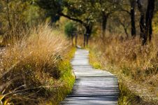 Free Boardwalk In Grasslands Royalty Free Stock Photo - 89741355