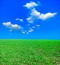 Free Field Stock Image - 8980841
