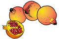 Free Illustration  Of Pomegranates Royalty Free Stock Photo - 8982185