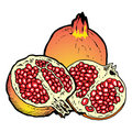 Free Illustration  Of Pomegranates Stock Images - 8982354