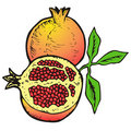 Free Illustration  Of Pomegranates Stock Photos - 8982373