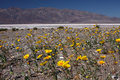Free Flowers In Death Valley Royalty Free Stock Photo - 8983605