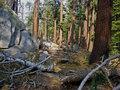 Free Trail Through Fallen Trees Stock Image - 8985291