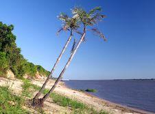 Free Amazon River Stock Photos - 8981323