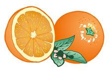 Free Composition Of Oranges Stock Image - 8982071