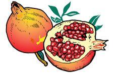 Free Illustration  Of Pomegranates Royalty Free Stock Photo - 8982165