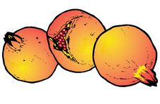 Free Illustration  Of Pomegranates Royalty Free Stock Photo - 8982175