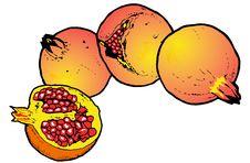 Free Illustration  Of Pomegranates Royalty Free Stock Photo - 8982185