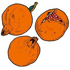 Free Illustration  Of Pomegranates Stock Photos - 8982193