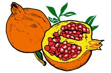 Free Illustration  Of Pomegranates Stock Photos - 8982203