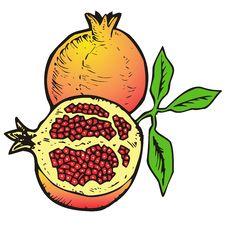 Free Illustration  Of Pomegranates Stock Photos - 8982373