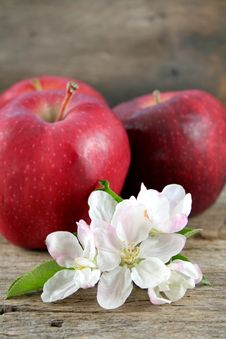 Free Apples And Apple Blooms Royalty Free Stock Photography - 8982487
