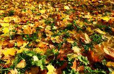 Free Autumn Leaves Royalty Free Stock Photos - 8982838