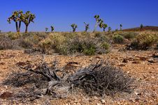 Free Joshua Trees In The Desert Stock Photos - 8983643