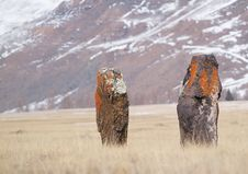 Free Two Ancient Menhirs Stock Photography - 8984262
