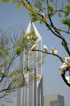Free Dove With Skyscraper Of Shanghai Stock Photography - 8984642