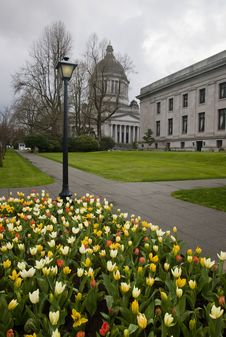 Free Tulips With Government Buildings Stock Photos - 8984653
