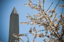 Free Washington Monument Royalty Free Stock Image - 8985456