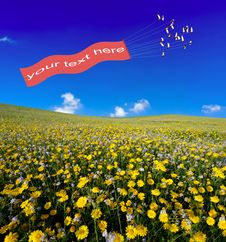 Free Daisies  Field Royalty Free Stock Photos - 8986408
