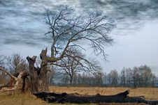Free Tree Affected With Flash Stock Photo - 8986420