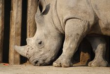 Free White Rhino Stock Image - 8988481