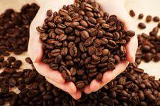 Free Coffee Beans Stock Photos - 8988763