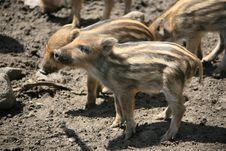 Free Piggy Stock Photography - 8989802