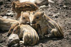 Free Piggy Stock Images - 8989844